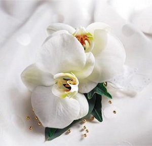Image of 10019 Exotic Orchids Corsage