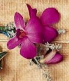 Image of 10138 Purple Orchid Boutonniere
