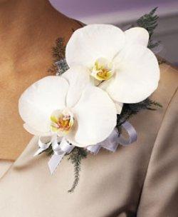 Image of 10670 Phaleonopsis Corsage