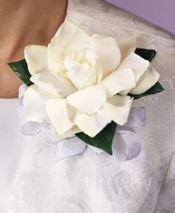 Image of 10691 Gardenia Corsage