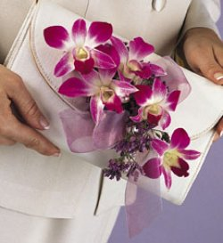 Image of 10720 Dendrobium Clutch