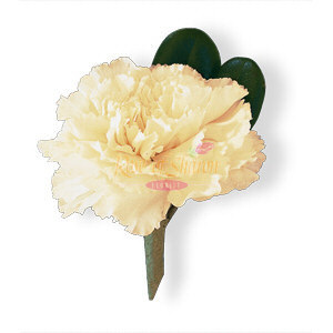 Image of 10811 White Carnation Boutonniere.