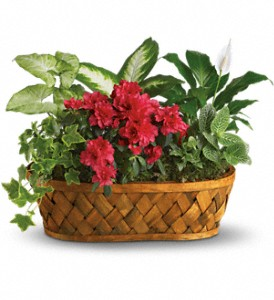 Plants Galore main product image