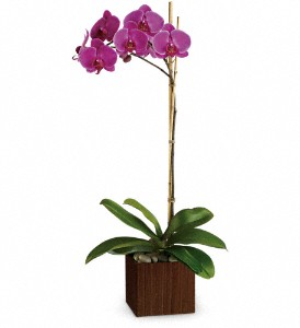 Sublime Orchid main product image
