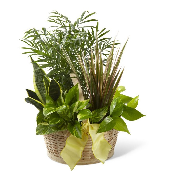 3557 French Garden product image
