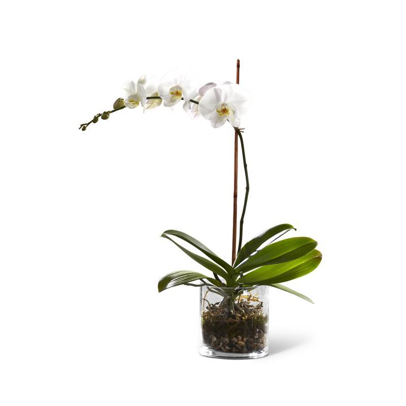 3865 White Orchid Planter product image