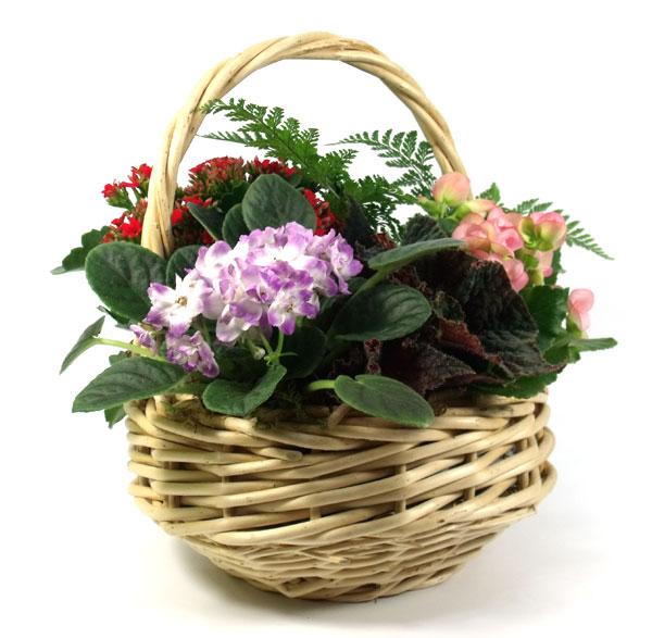 1991 Basket Garden product image