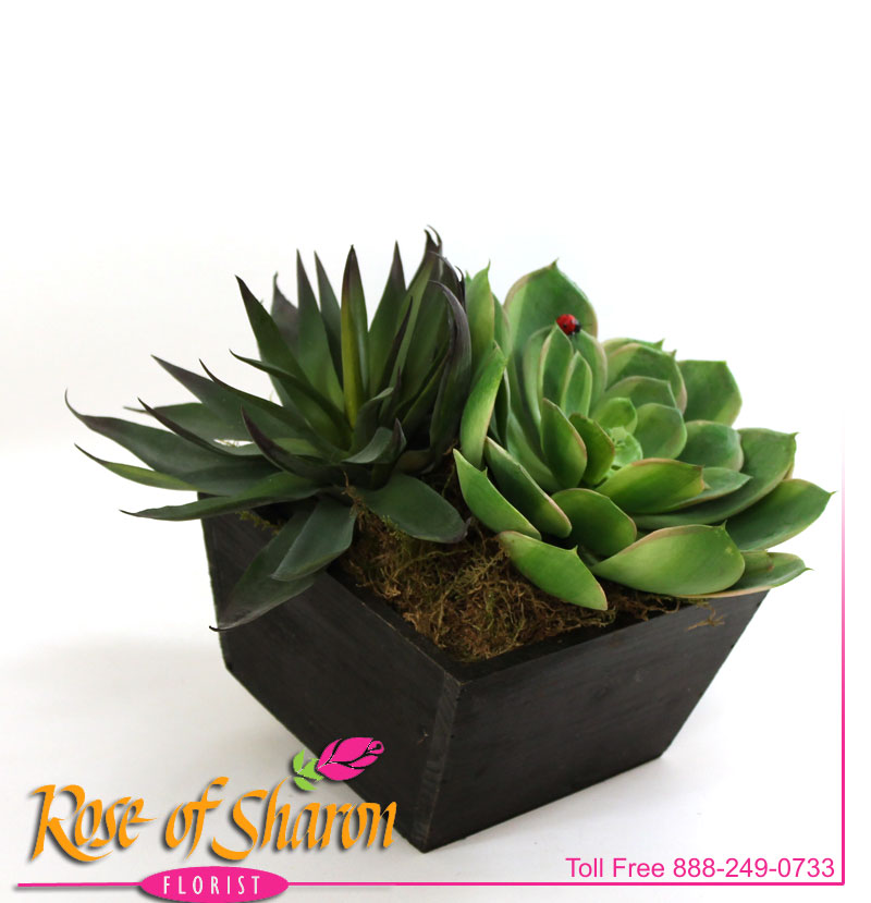 2435 Artificial Succulent product image