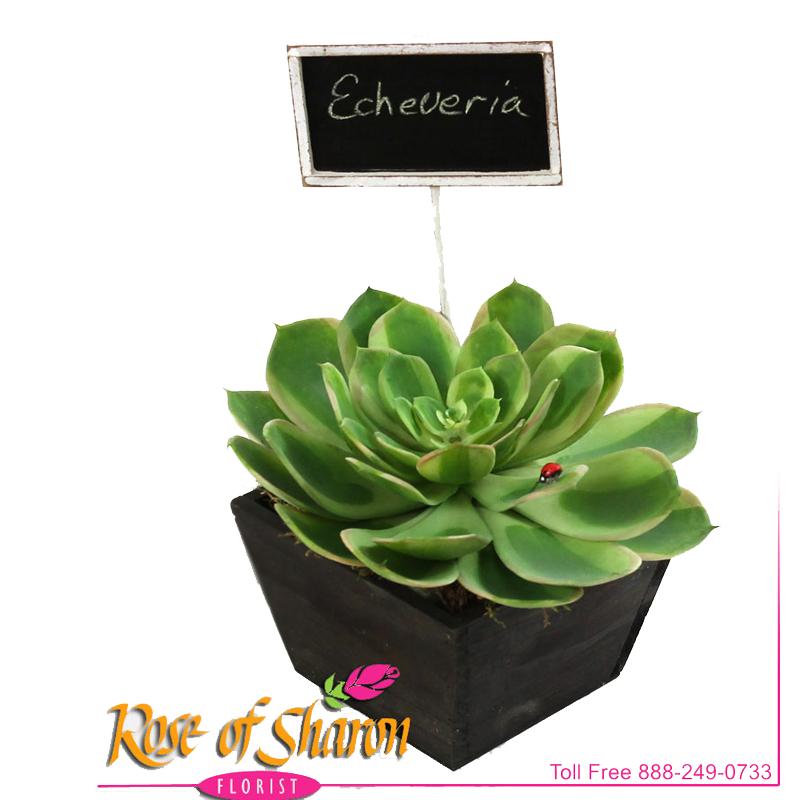 Artificial Succulent main product image