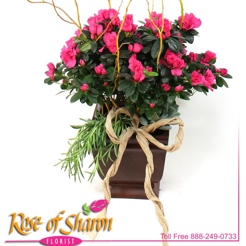 Azalea & Succulents main product image