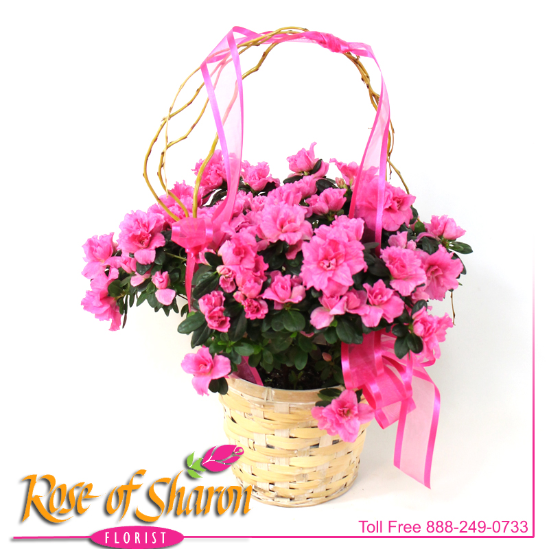 Azalea in Light Basket main product image