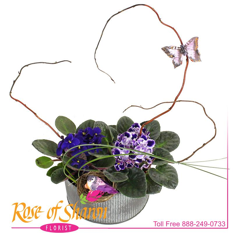 2565 Violet Garden in Norah Bowl Image One