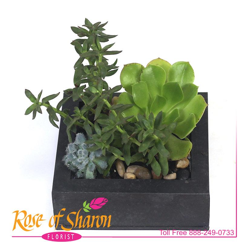 Rylee Planter main product image