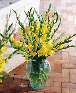 Image of 10070 Gladiola Altar Arrangement