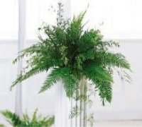 Image of 10112 Chuppah Pedestal Arrangement