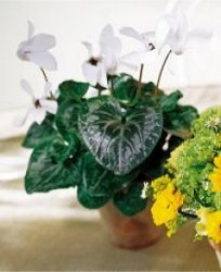 Image of 10113 Green Gardens Centerpiece