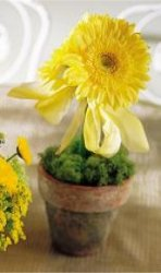 Image of 10115 Yellow Gerbera Centerpiece