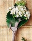 Image of 10135 Pure Elegance Boutonniere
