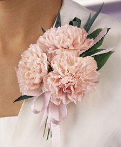 Image of 10686 Carnation Corsage