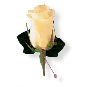 Image of 10820 White Rose and Ivy Boutonniere